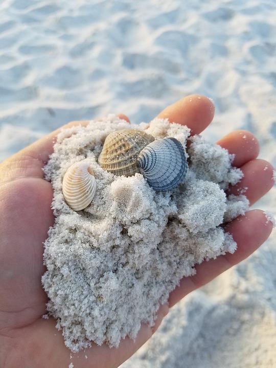 Shells, Beach, Sand