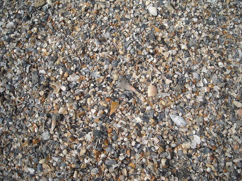 Seashells, Shells, Sea, Beach, Ocean, Travel, Summer