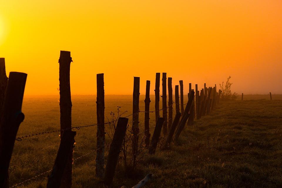 Field, Meadow, Fencing, Wire, Shepherd, Posts, Sunrise