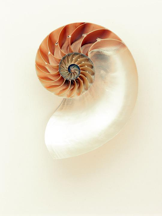 Nautilus, Shell, Shimmer, Silver, Mother Of Pearl