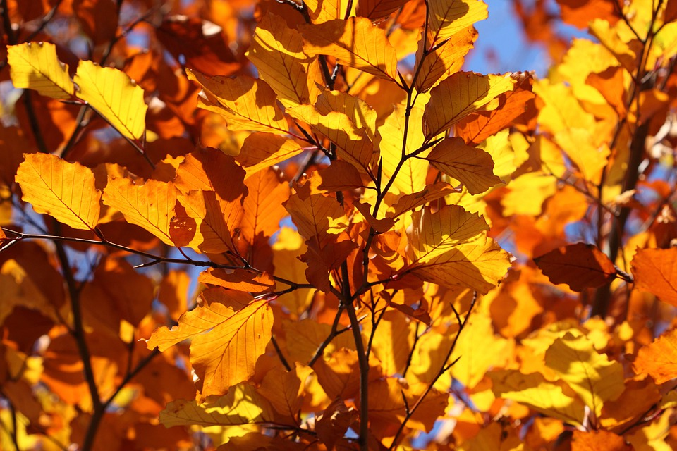 Leaf, Leaves, Yellow, Autumn, Fall, Shining, Shine