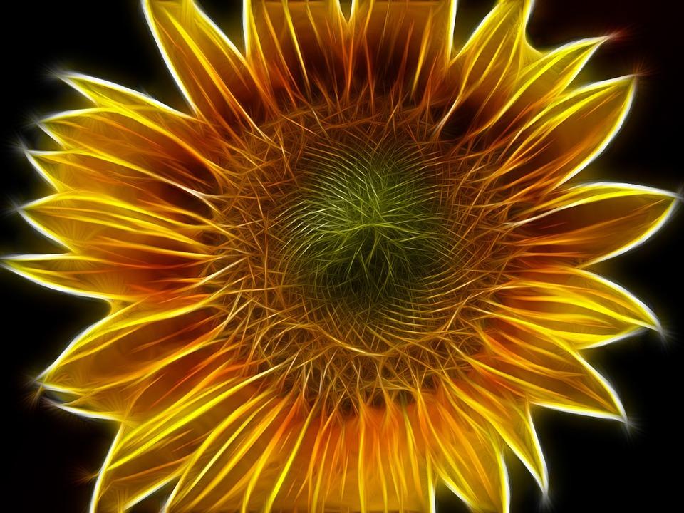 Sunflower, Abstract, Edited, Filter, Shining, Flower