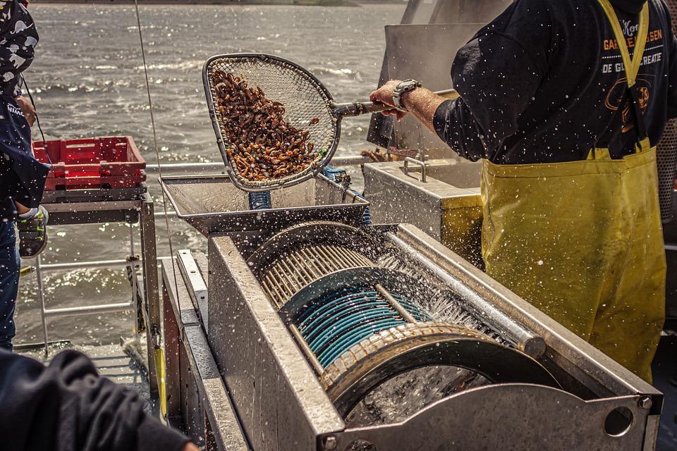 Shrimp, Cook, Hot, Steam, Boiler, Ship, Cutter, Fishing