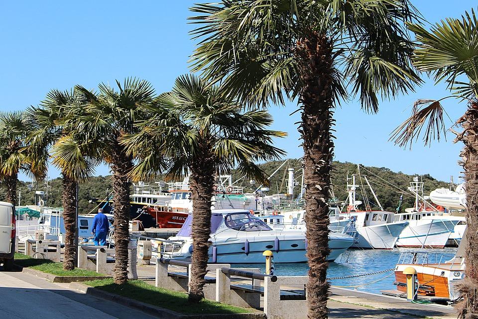 Palm Trees, Harbor Promenade, Ships