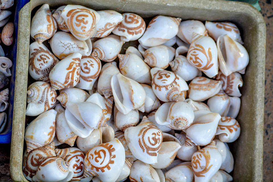 Snail, Shell, India, Gujarat, Exhibition, Shopping
