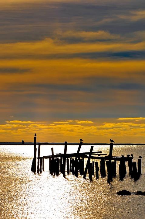 Island, Tower, Coast, Shore, Nautical, Bird, Seaside