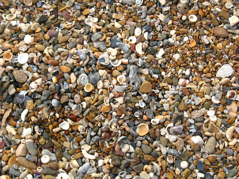 Shells, Beach, Shelly Beach, Shore, Coastal, Seashell