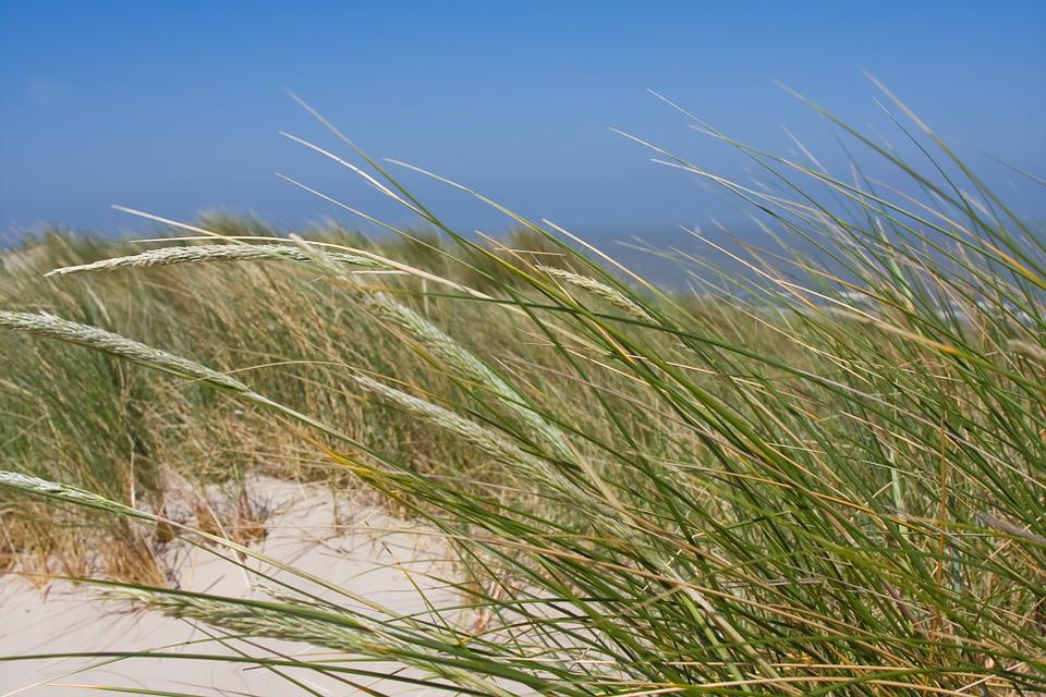 Beach, Dunes, Coast, Ocean, Shore, Water, Belgium