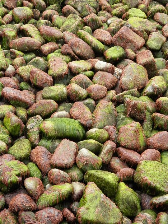 Rocks, Seaweed, Shore, Stones