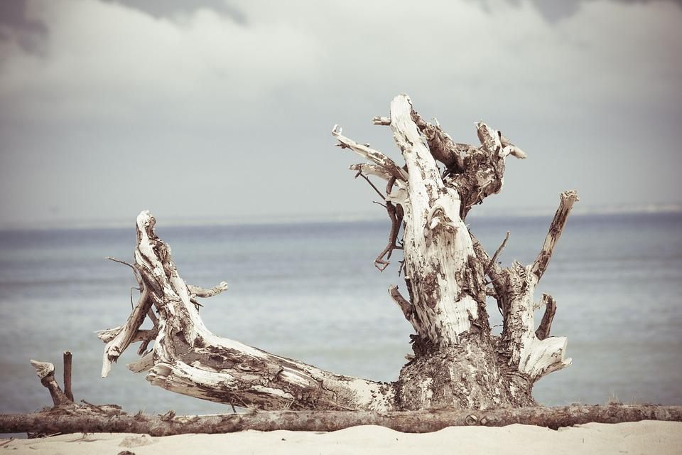 Nature, Beach, Shore, Sand, Tree, Stump, Branches, Bark