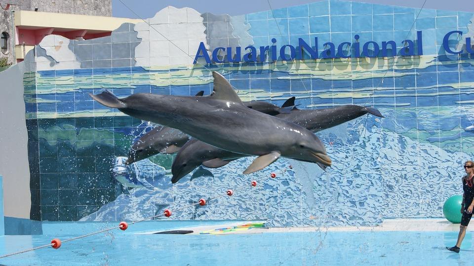 Dolphins, Show, Aquarium