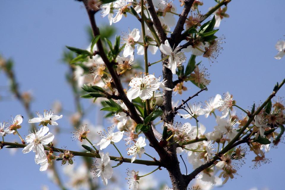 Flower, Tree, Shrub, Branch, Plant, Spring