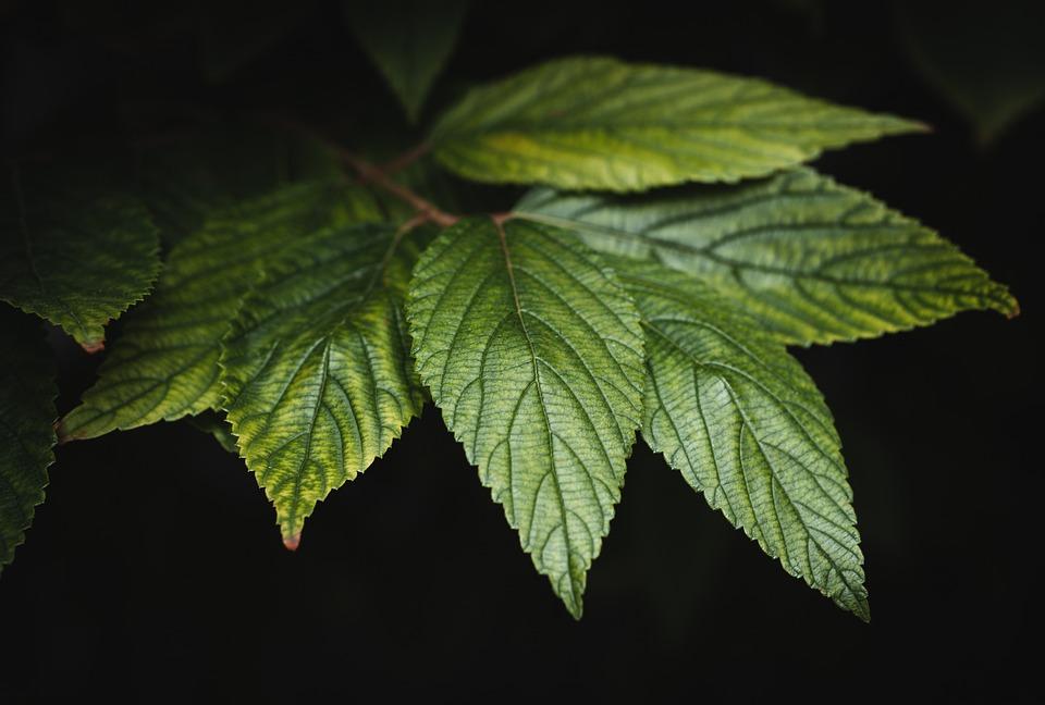 Leaf, Tree, Bush, Green, Nature, Forest, Shrubs, Plant