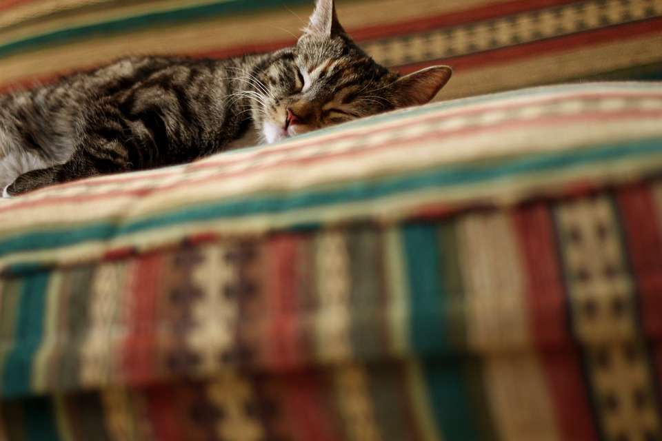 Kitten, Gata, Pet, Animal, Pets, Animals, Rest, Siesta
