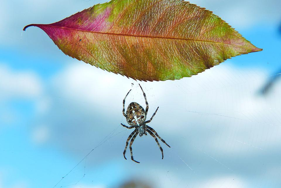 Signs Of Autumn, Leaf, Spider, Spider's Web, Sky