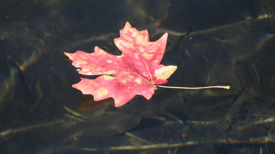 Nature, Silence, Water, Sheet, Autumn