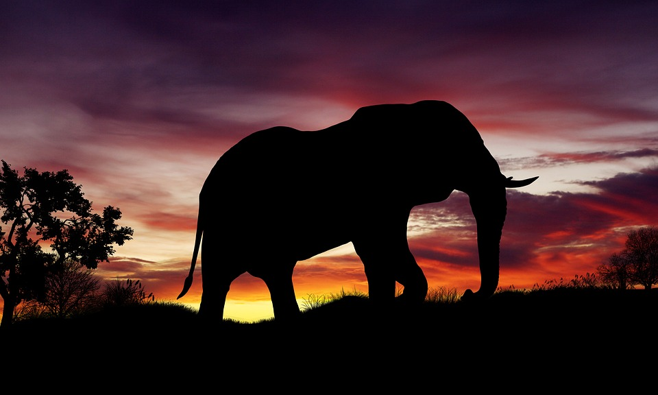 African elephant silhouette