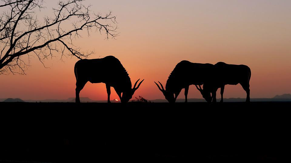 Sunset, Animals, Onix, Nature, Landscape, Silhouette