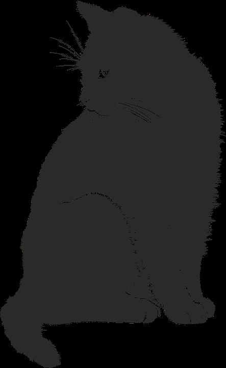 Cat, Shadow, Silhouette, Black, Animal