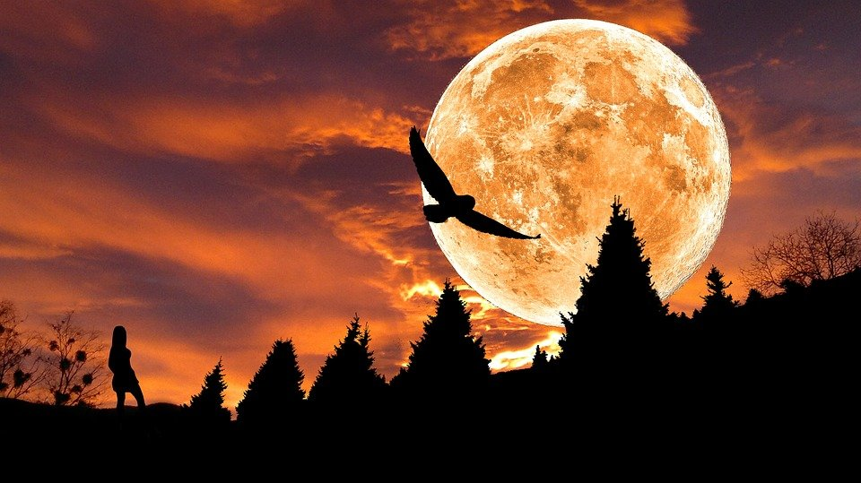 Composing, Image Editing, Fantasy, Moon, Silhouette
