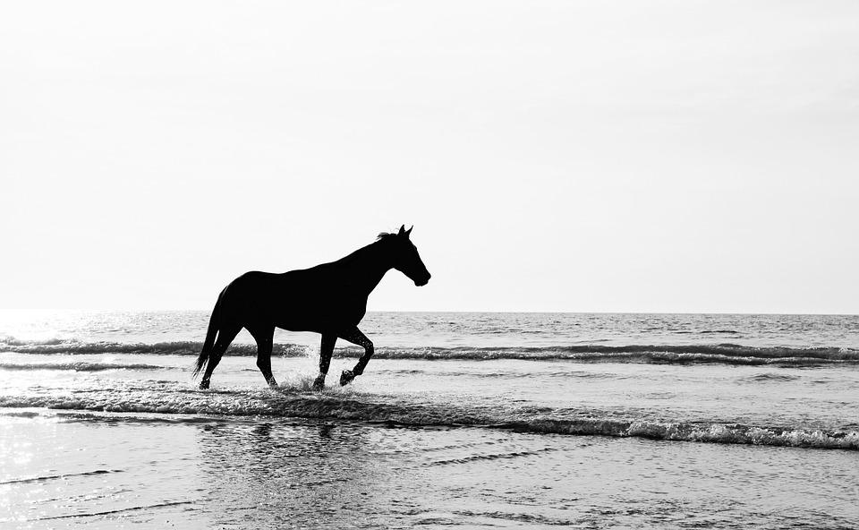 Silhouette, Black, Nature, Landscape, Minimalist, Horse