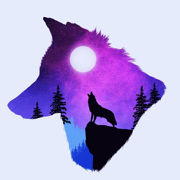 Wolf, Night, Moon, Sky, Landscape, Nature, Silhouette