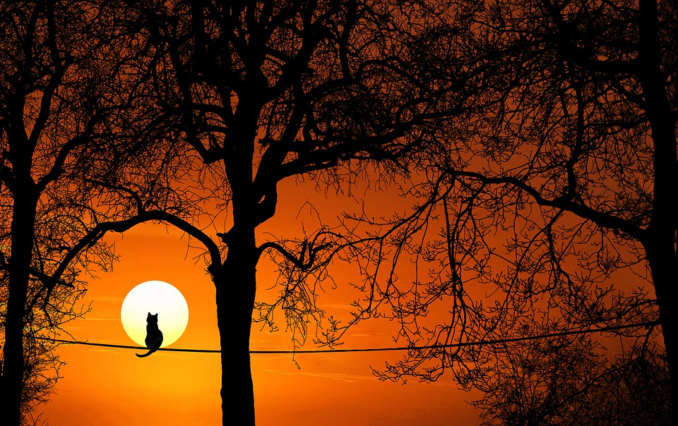 Tree, Cat, Silhouette, Sunset, Dawn, Dusk, Nature, Sun