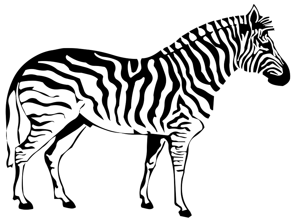 Silhouette, Drawing, Outline, Zebra, Nature, Sketch
