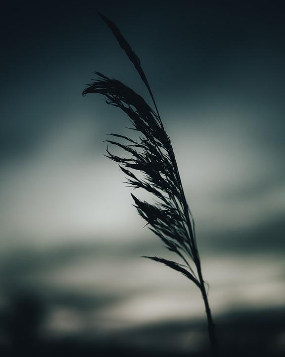 Evening, Grass, Plant, Silhouette, Sunset, Twilight