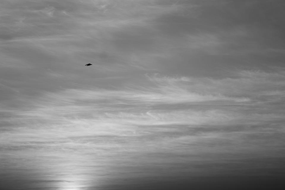 Bird, Sky, Dark, Clouds, Grey, Flying, Silhouette