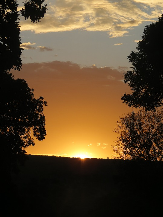 Sunset, Silhouette, South Africa, Orange, Trees