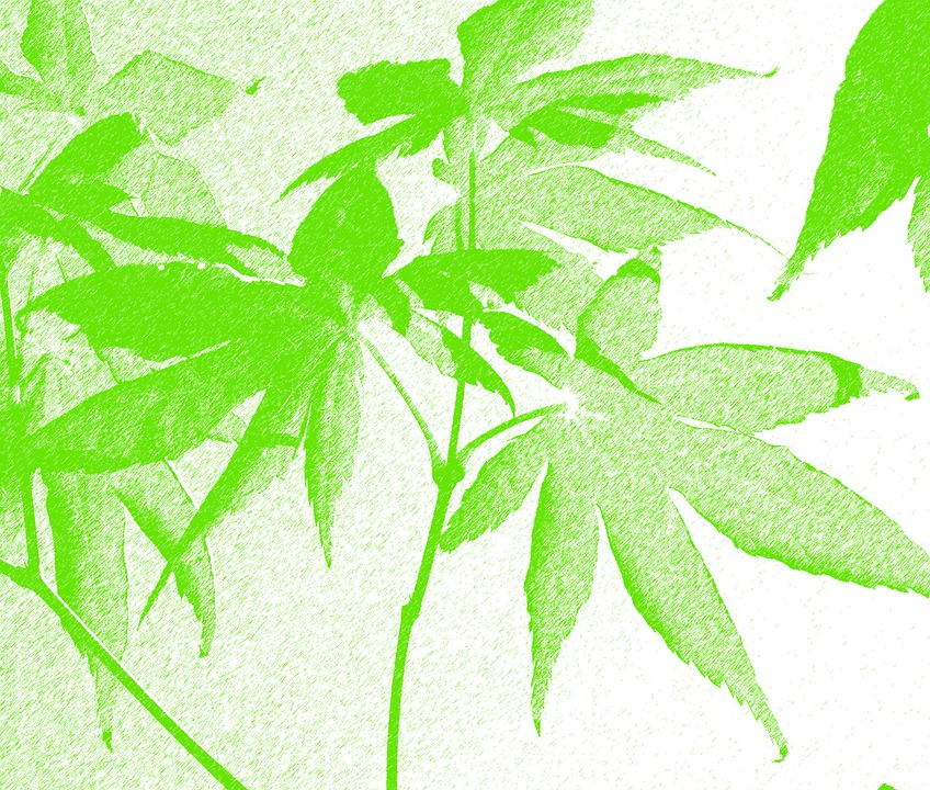 Acer, Green, Leaves, Tree, Nature, Weed, Silhouette