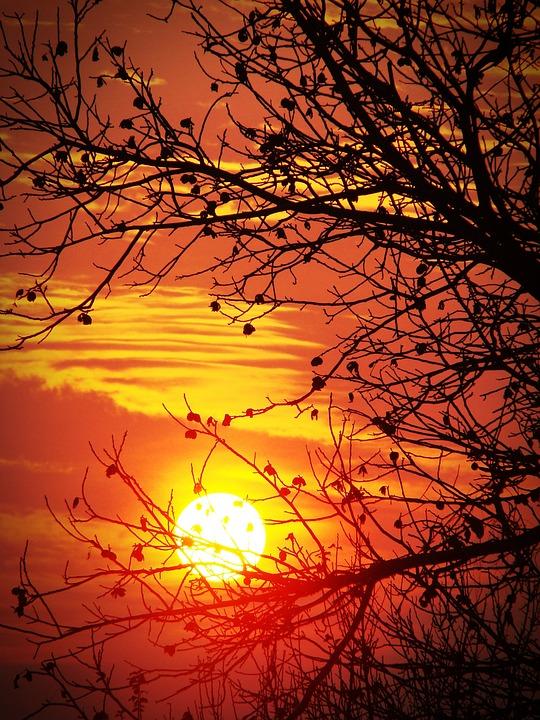 Sunset, Red, Orange, Sun, Tree, Branch, Silhouette