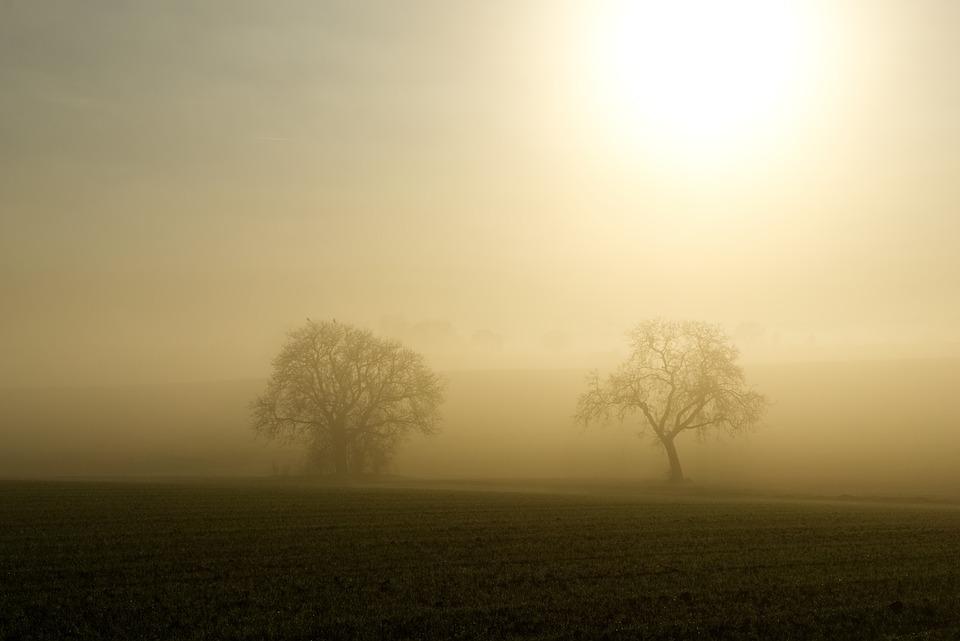 Fog, Sun, Backlighting, Trees, Silhouette, Mystical