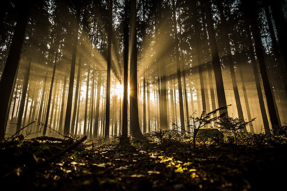 Forest, Trees, Sunlight, Silhouette, Sunrays, Sunrise