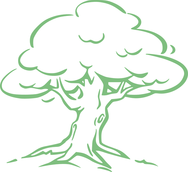 Silver Oak, Oak, Tree, Oak Tree, Green