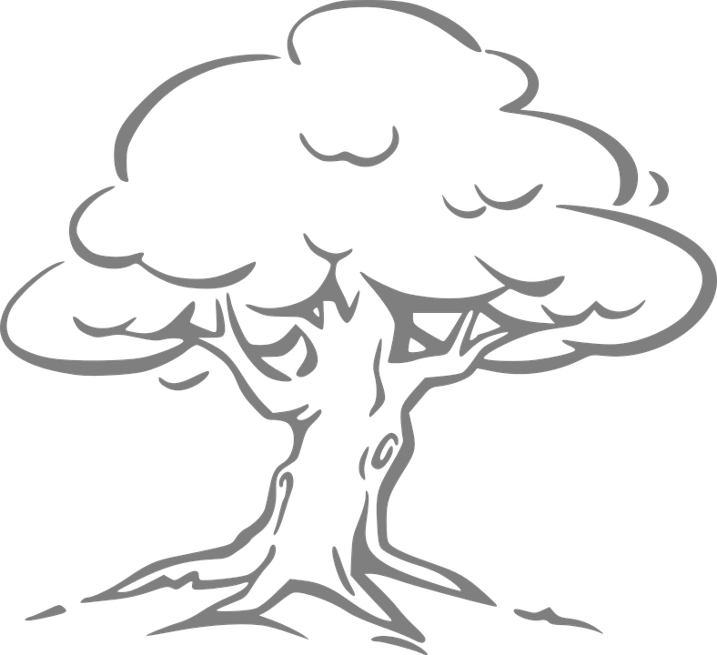Silver Oak, Oak, Tree, Oak Tree, Outline