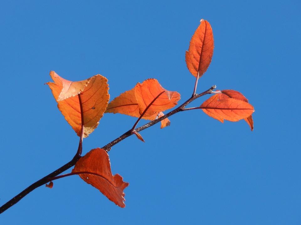 Single, Branch, Nature, Leaf