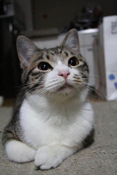 Cat, Pet, Sit Down, Cute