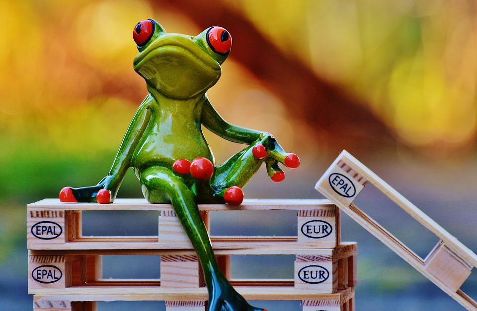 Frog, Euro Pallets, Sit, Pallets, Funny, Cute, Sweet
