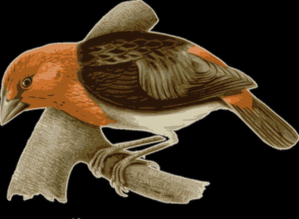 Bird, Feathers, Animal, Brown, Orange, Sitting, Twig