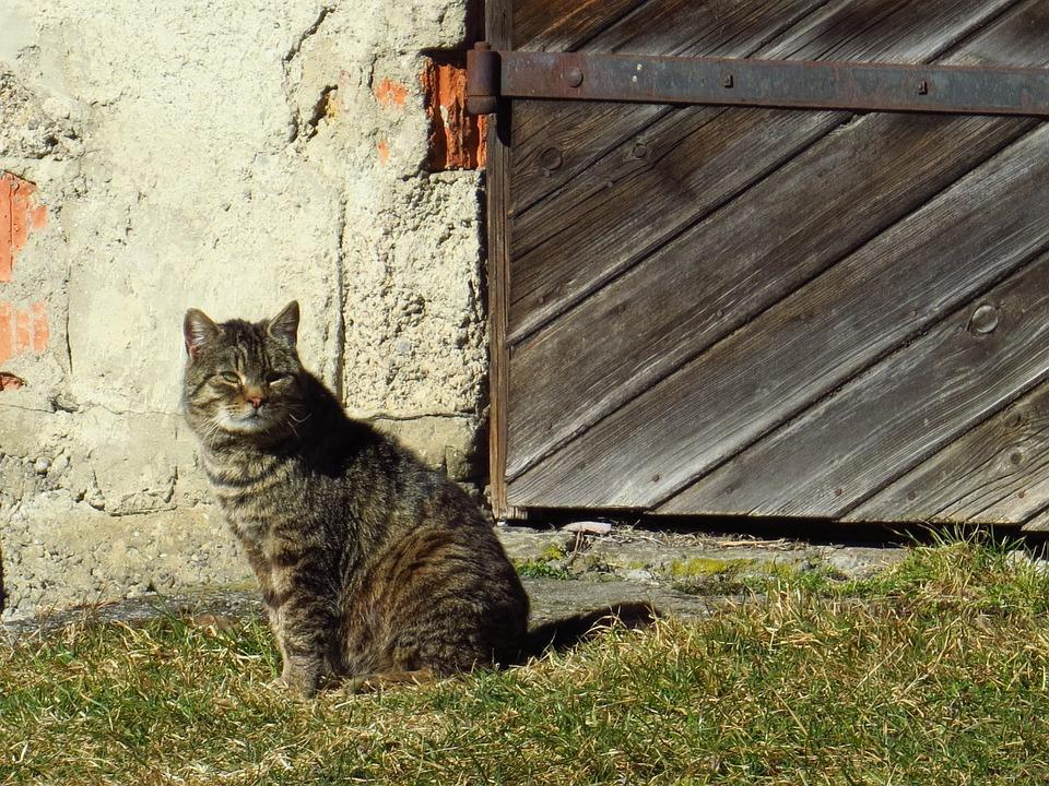 Cat, Sitting, Old Gate, Animals, Pet