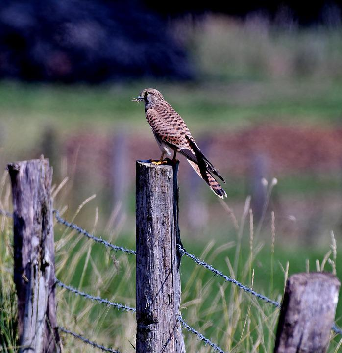 Valk, Bird Of Prey, Prey, Bird, Feathers, Beak, Sitting
