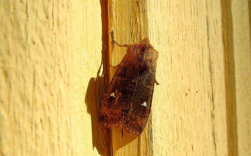 Butterfly, Kiitäjä, Bug, Insect, Nature, Sitting, Wing