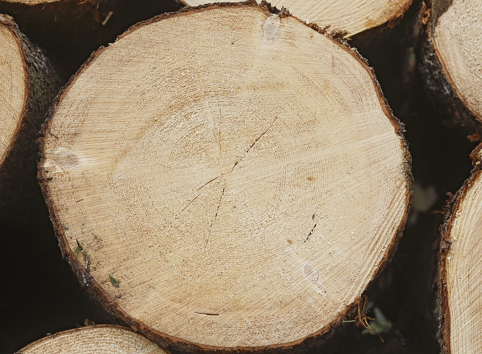 Six, Spruce Forest, Softwood, Conifer, Wood