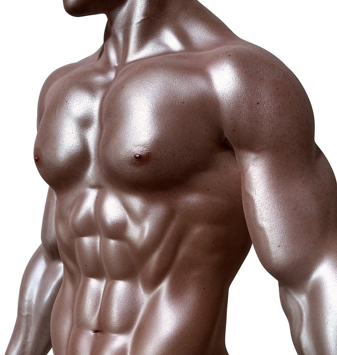 Bodybuilder, Sixpack, Six-pack, Muscles, Abs, Fitness