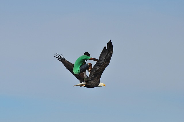 Skatebirding, Eagle, Sky, Flying, Fly, Bald Eagle