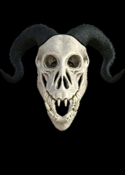 Skeleton, Anatomy, Skull, Head, Dragon