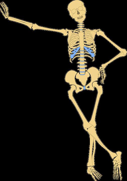 Skeleton, Human, Skull, Bone, Bones, Anatomy, Funny