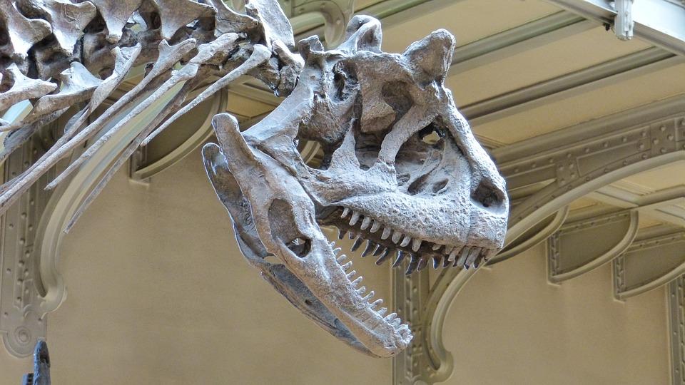 Museum, Skeleton, Dinosaur, Dinosaur Skeleton